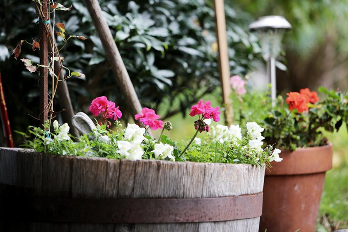 Balkon W Bloku Jak Zadbać O Kwiaty Opinie I Komentarze